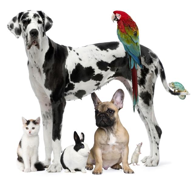 mascotas-1